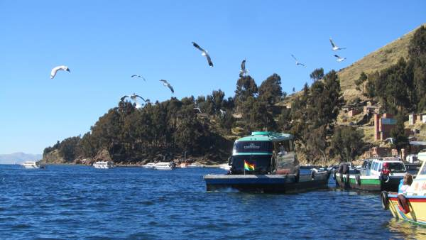 Approaching the shore accompanied by numerous seabirds