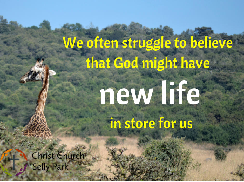 Sermon quote: We often struggle to believe that God might have new life in store for us