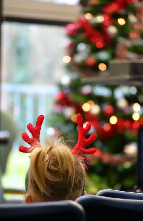 Antlers and a Christmas tree