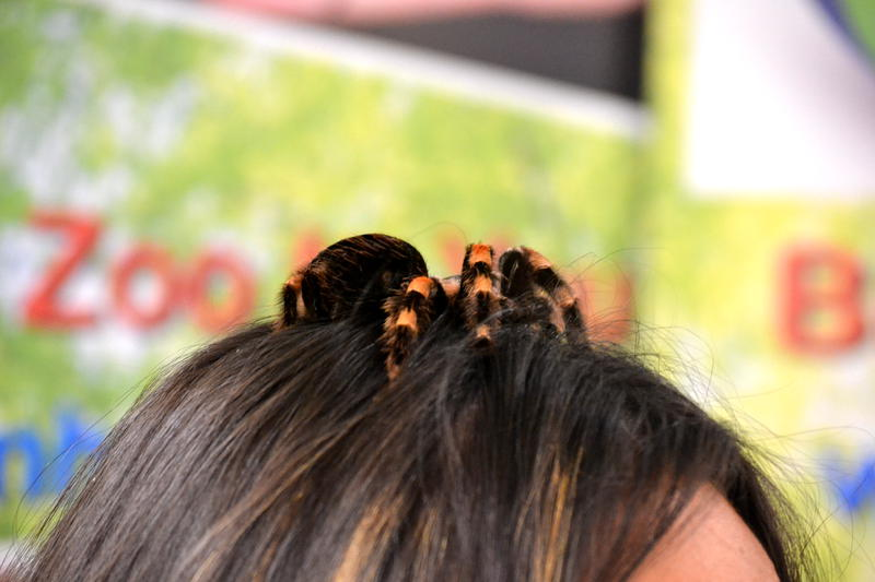 A tarantula on top of a human head